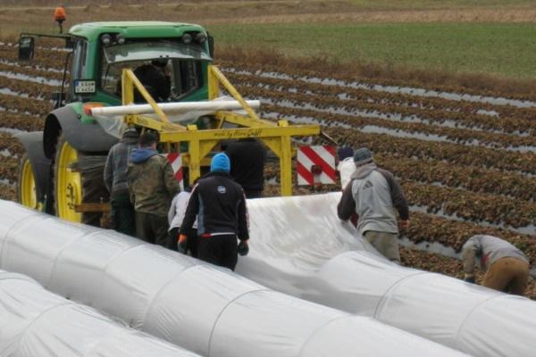 Spargelfeld mit Traktor